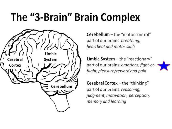 3 bộ phận của não bộ liên quan tới sự căng thẳng của on người.Nguồn internet.