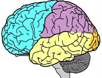 Não bộ của trẻ em. Nguồn internet.