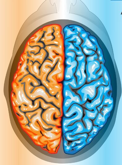 Các chức năng của não phải và não trái của con người