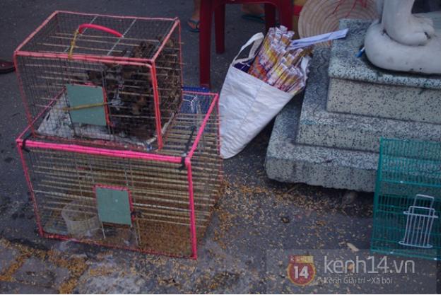 Với giá bán 15.000 đồng/con, một lồng chim cứ bán ra rồi bắt lại để bán tiếp như thế này có thể đem lại lợi nhuận cả chục triệu đồng cho những người kinh doanh chim phóng sinh.