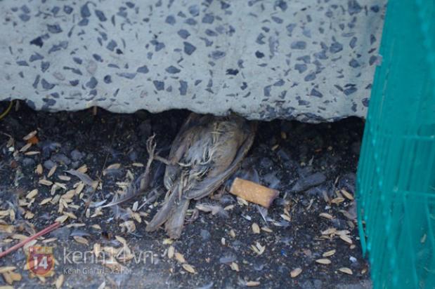 Xác một con chim phóng sinh nằm vất vưởng dưới bậc thềm.