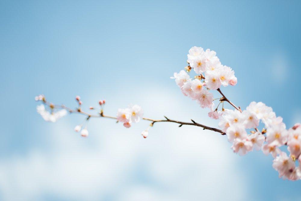 the true spring.jpg