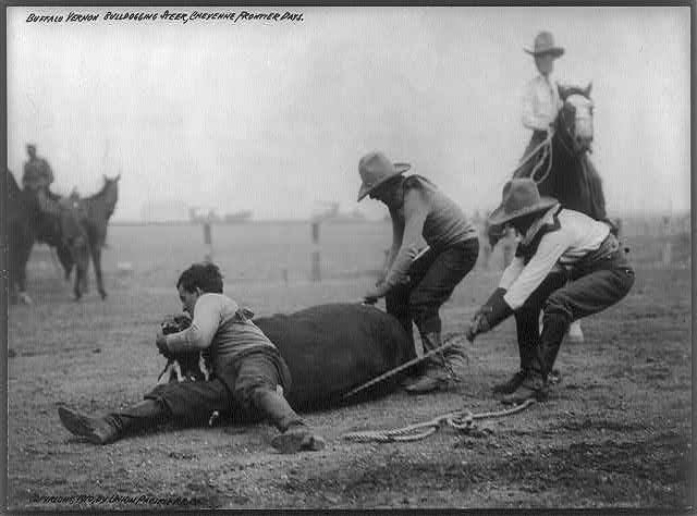 Branding a Steer at the Cheyenne Frontier Days | Circa 1910