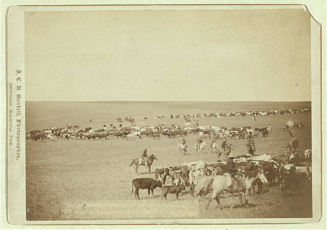 Cowboys on the Cattle Range in Belle Fouche | Circa 1887