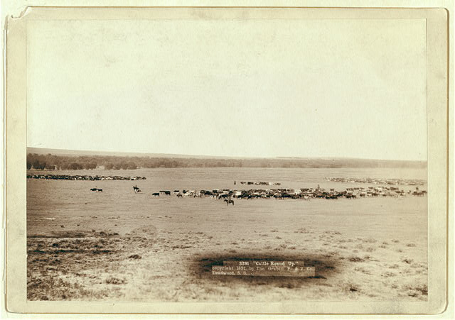 Distant View of Cowboys and Cattle Herds on the Plains | Circa 1891