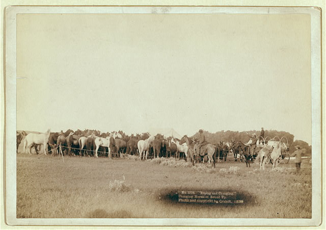 Rear View of Herd of Horses Being Roped by Cowboys in South Dakota | Circa 1890