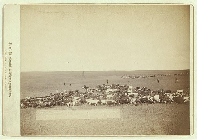 Round-up Scene in Belle Fouche | Circa 1887