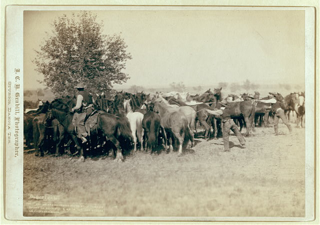 Three Cowboys Roping a Herd of Horses on the Cheyenne River | Circa 1887