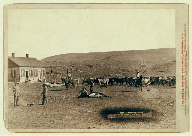 Six Cowboys Branding Cattle in Front of a House in South Dakota | Circa 1891