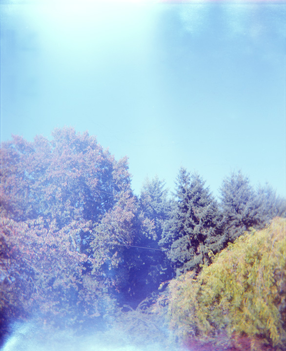 trees_sauvie_web.jpg