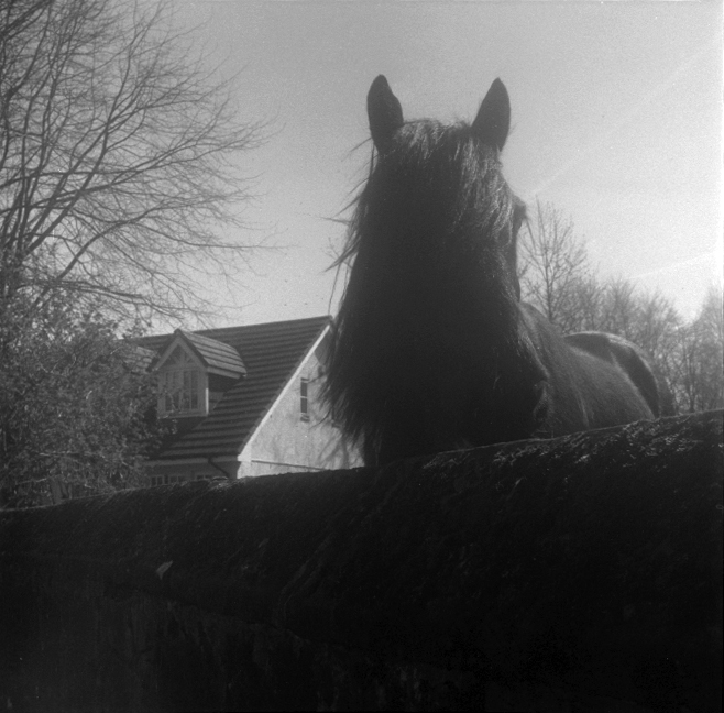 horse_web.jpg