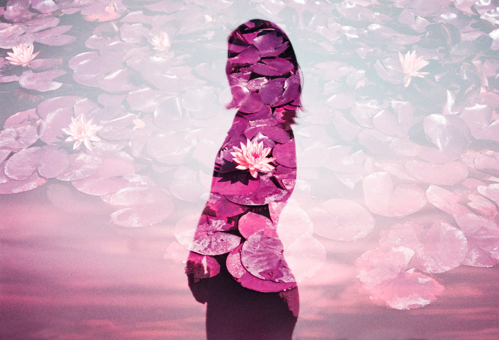 Love Lotus