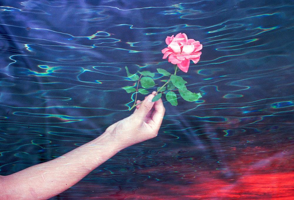 Under Rose Sky