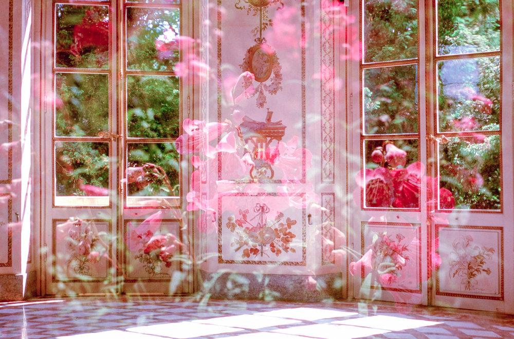 Sunroom Bloom