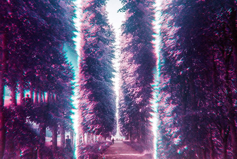 Forest Hallways