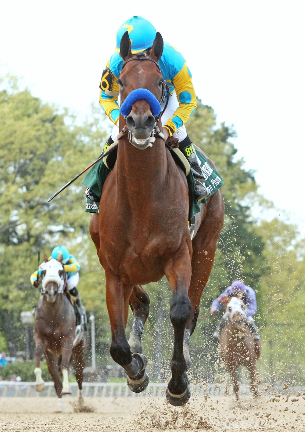 American Pharoah 2016 American Triple Crown Winner.