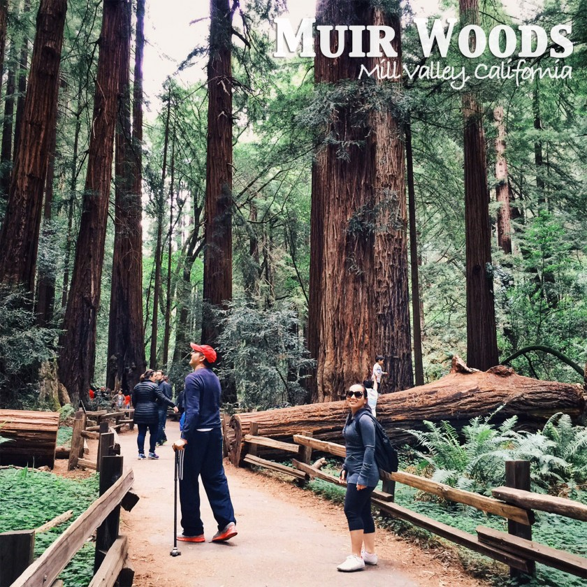 Muir-Woods-Thumb-840x840.jpg