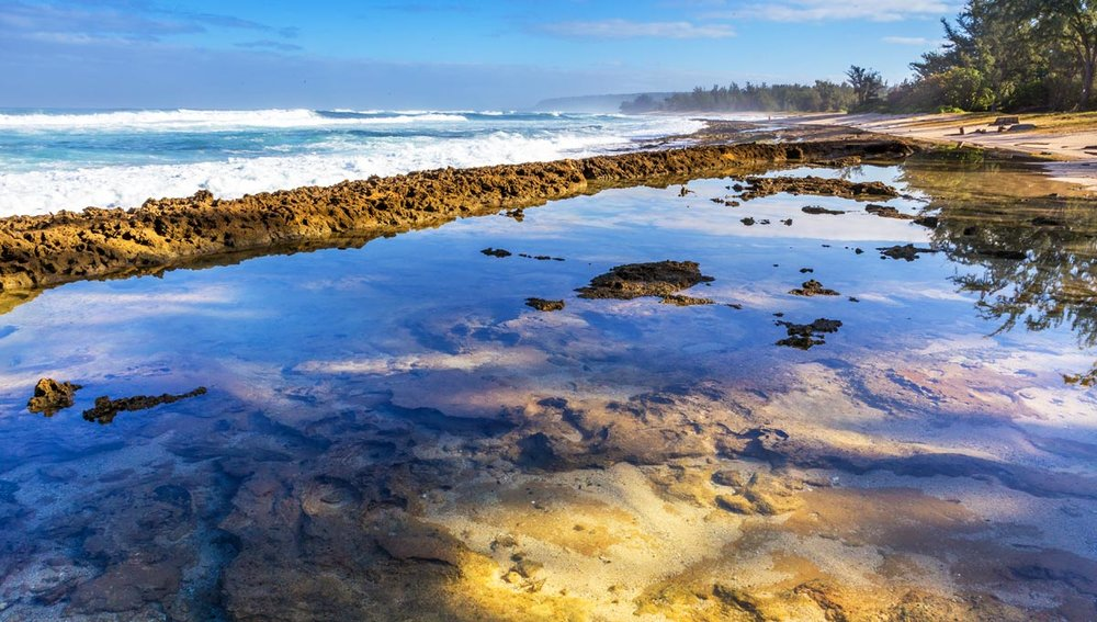 North Shore tide pool (© Milton Wheeler )
