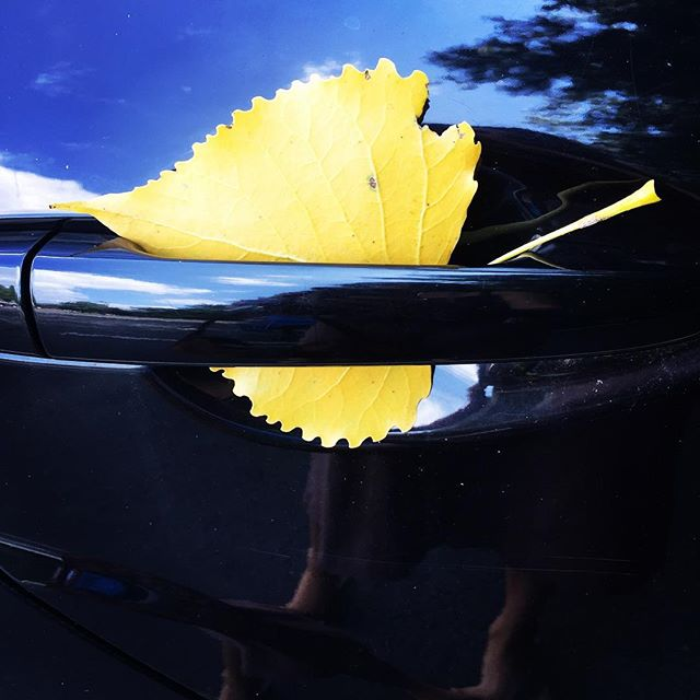 Someone got a love letter from a tree in their car door handle! • • • #loveletter #leaf #yellow #summer #fall #unexpectedlove #chooselove #love #loveiseverywhere #blessing #lookforthegood #yogaeverywhere #yogaoffthemat #decadentwellness #yogateacher #eyesopen #grateful #blessed #betweenyogaclasses