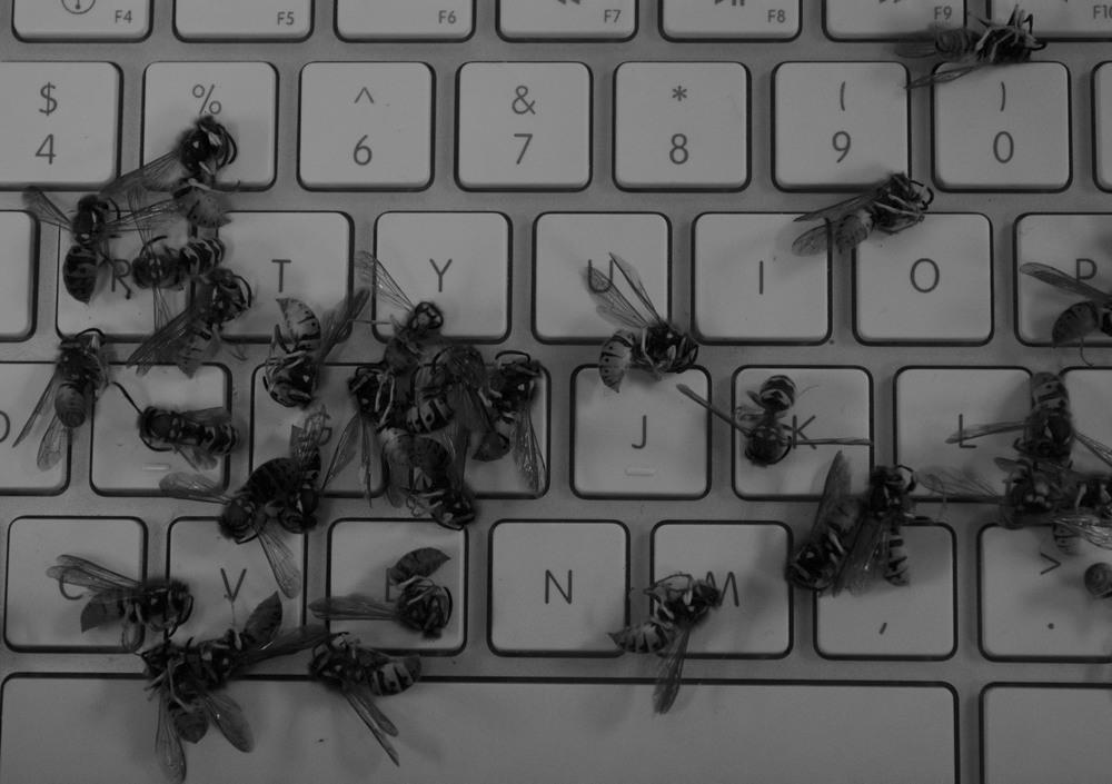 bees on keys (1).jpg