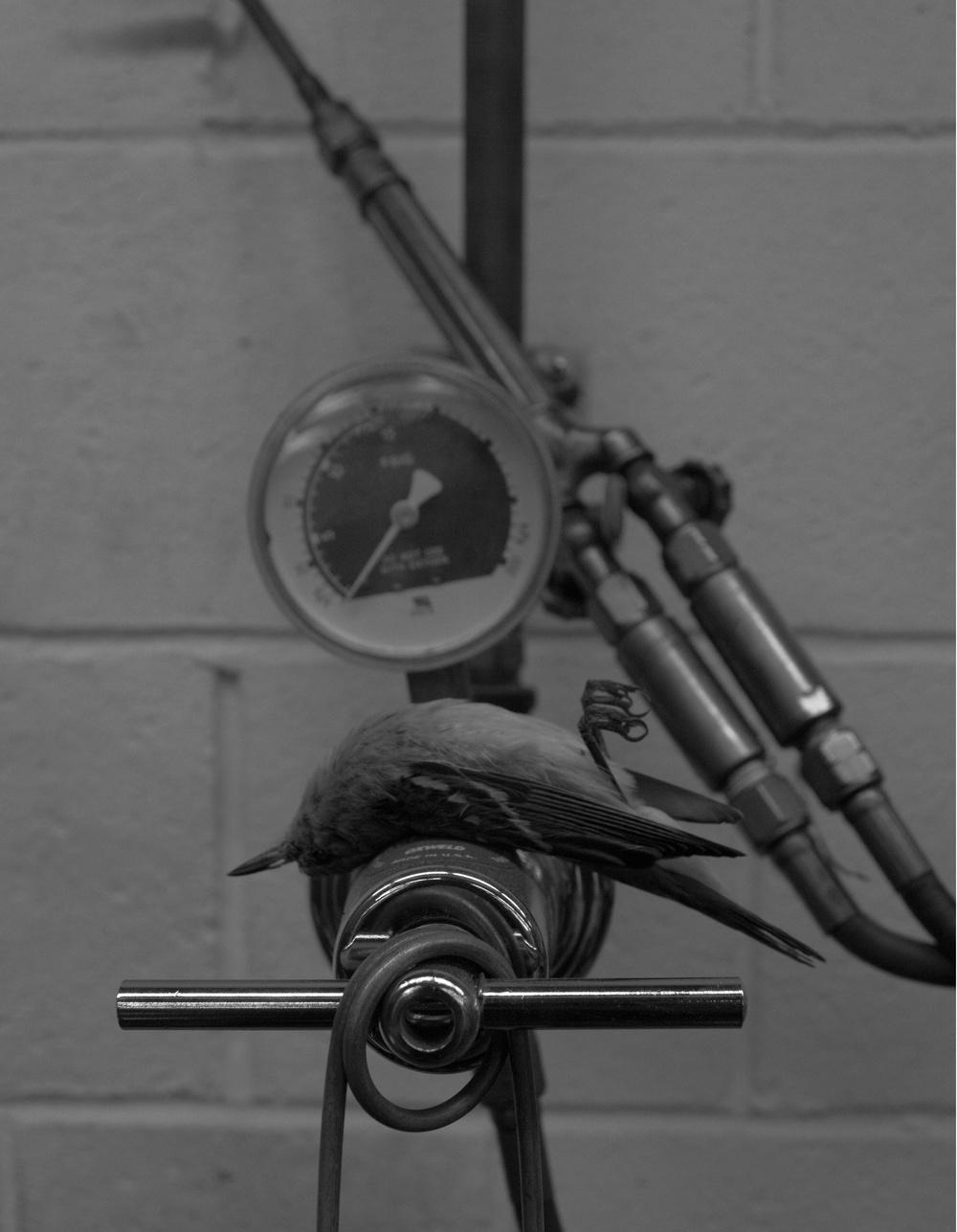 welding bird.jpg