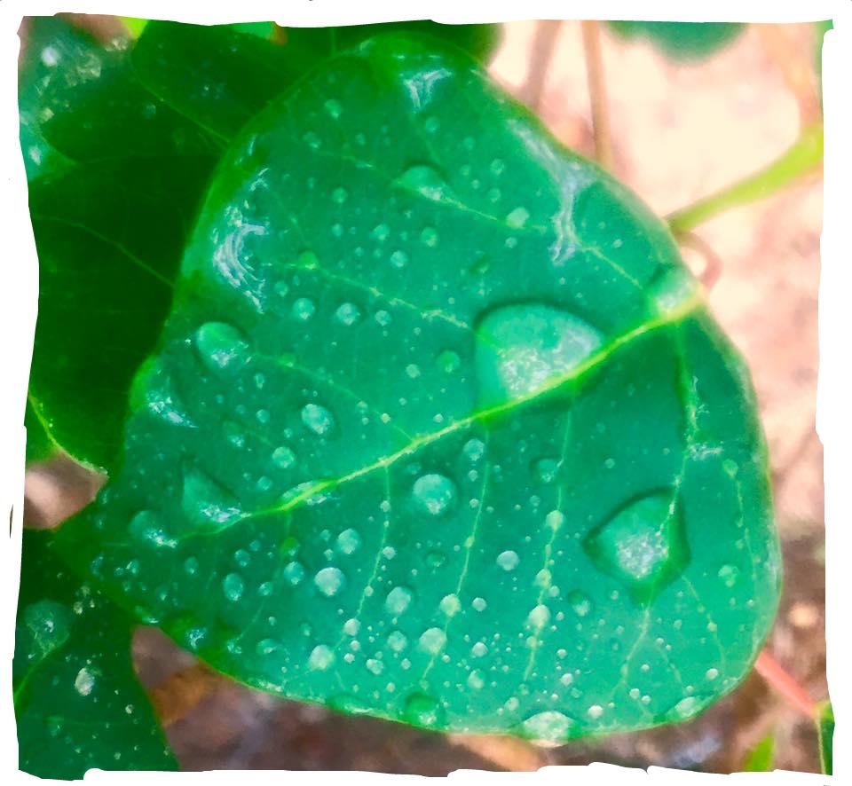 leaf.jpeg