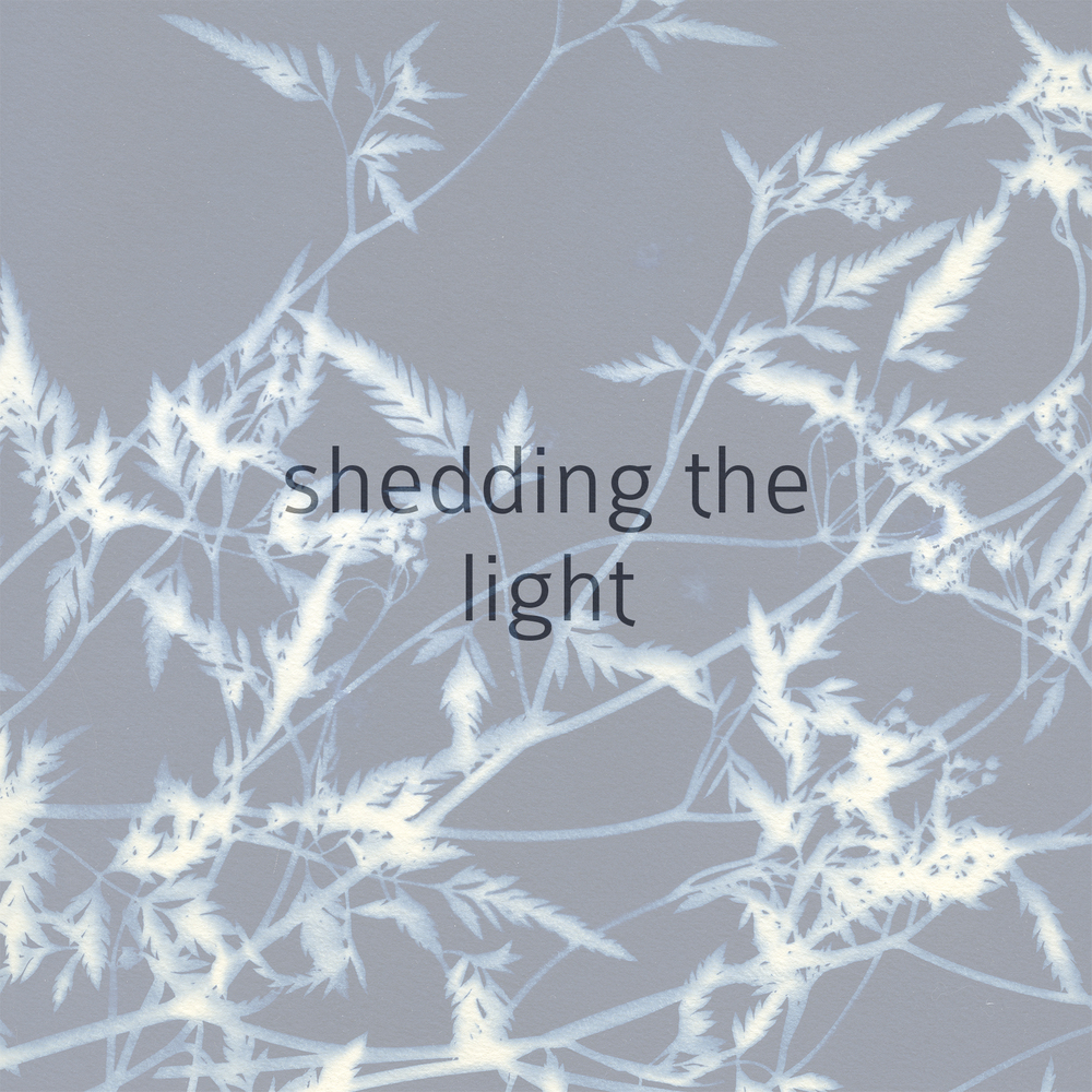 shedding the light.jpeg