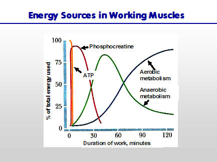 The longer you go, the more important is your aerobic energy system.