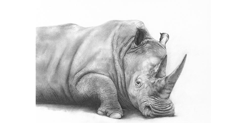 Andrew Howells_White Rhino