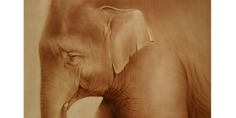 Andrew Howells_Golden Elephant
