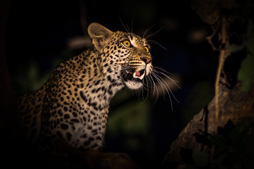 39208764_leopard-kwhai-river.jpg