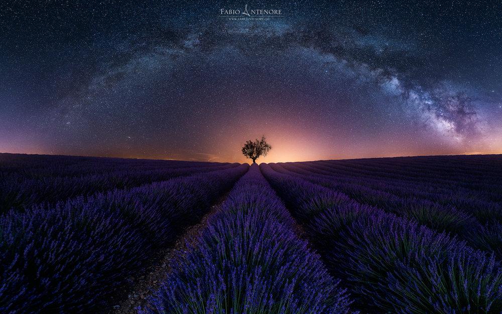 Purple Arch-2.jpg