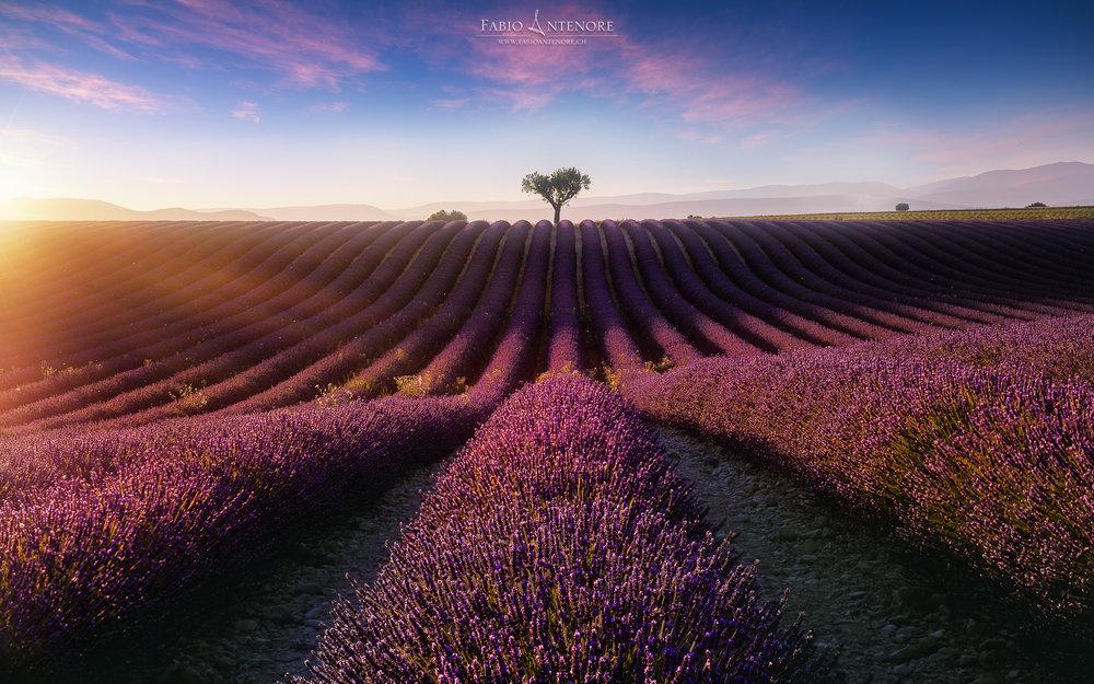 Purple Sun.jpg