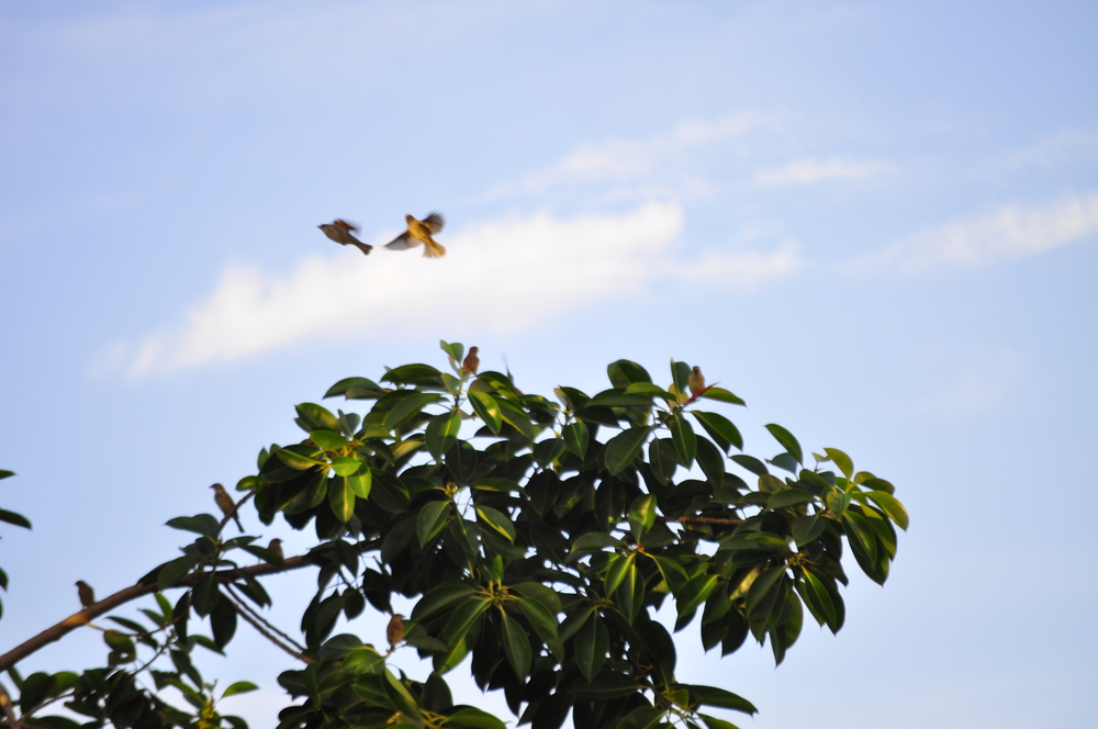 INARAadnanbirds