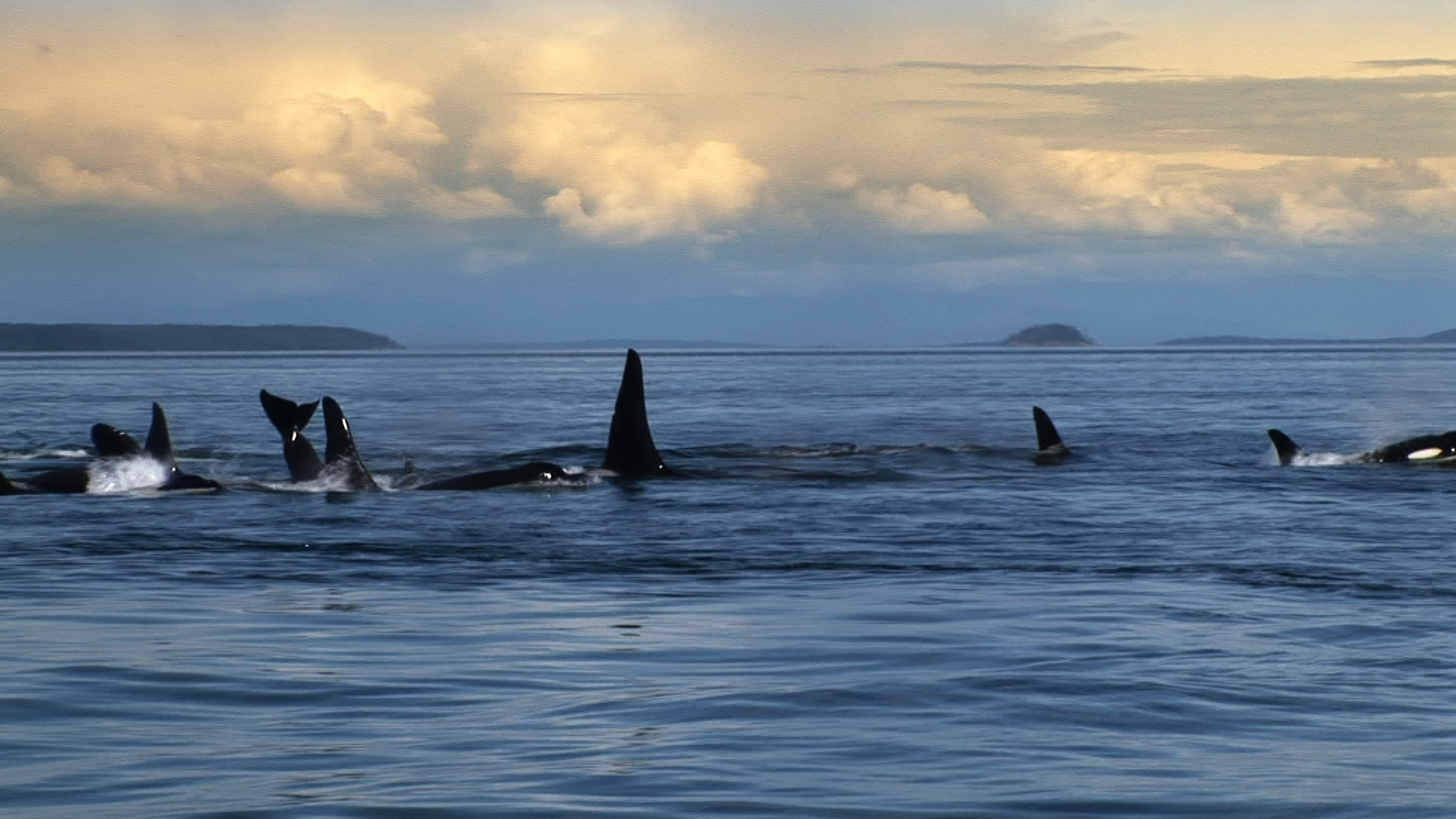 Blackfish Dogwoof Documentary (9).jpg