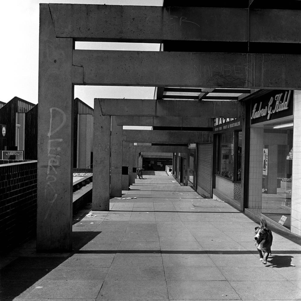 23. walkway dog-web.jpg
