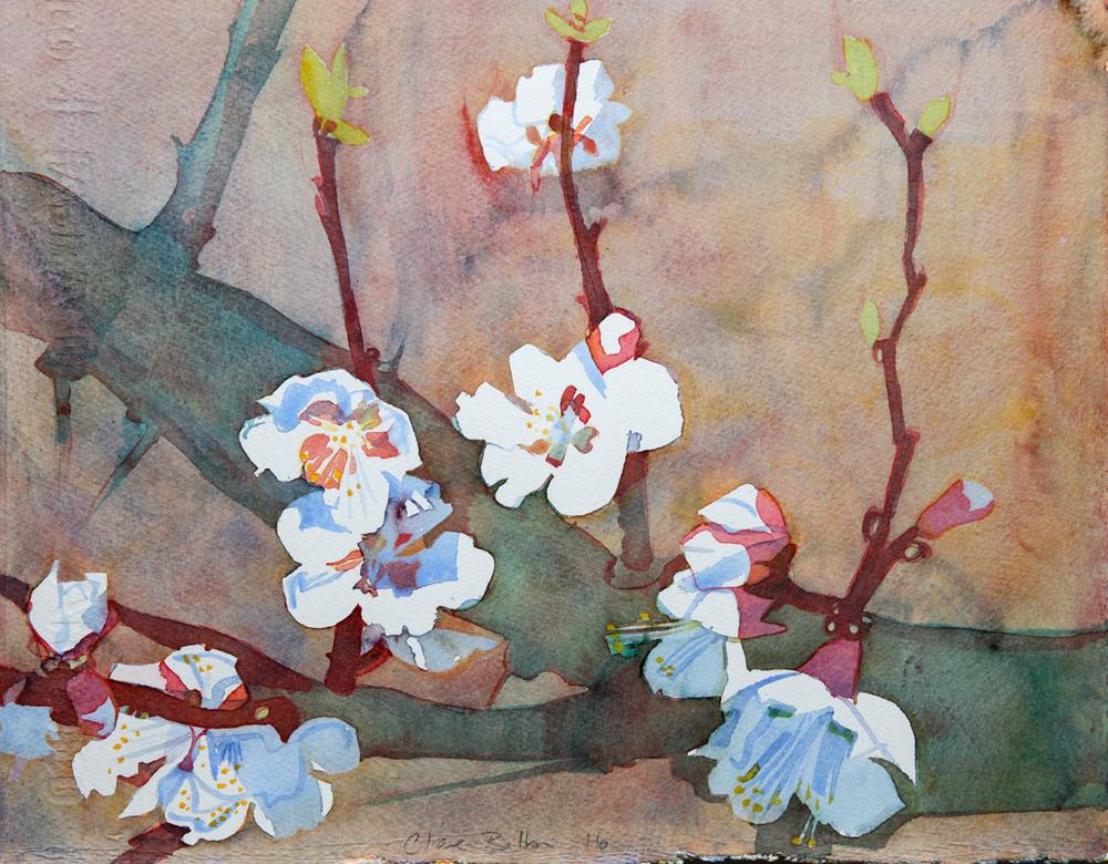 3-apricot-blossom-2016.jpg