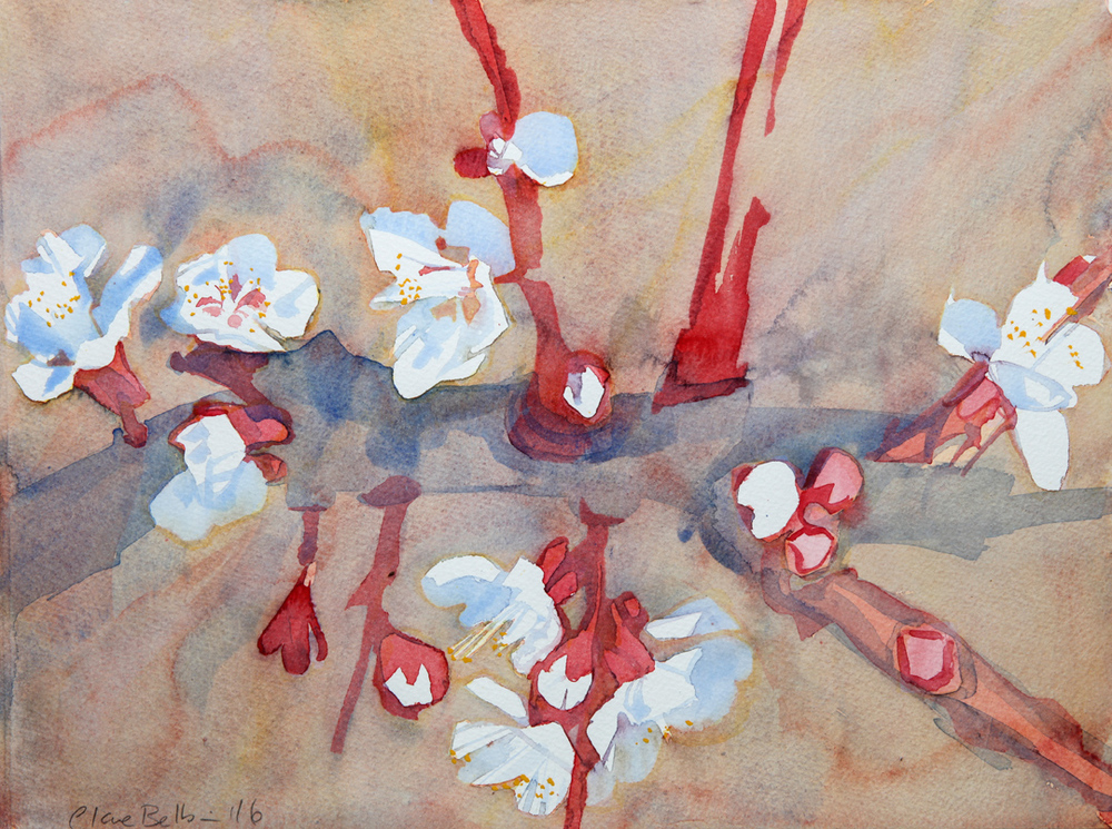 1-apricot-blossom-2016.jpg