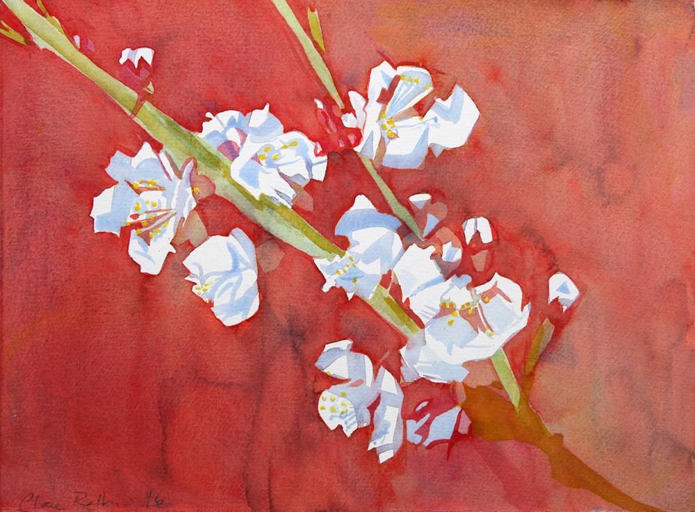 3-greengage-blossom-2016.jpg
