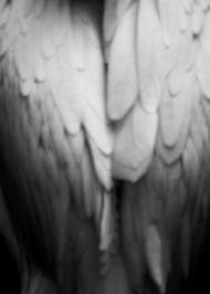 hidden_angels