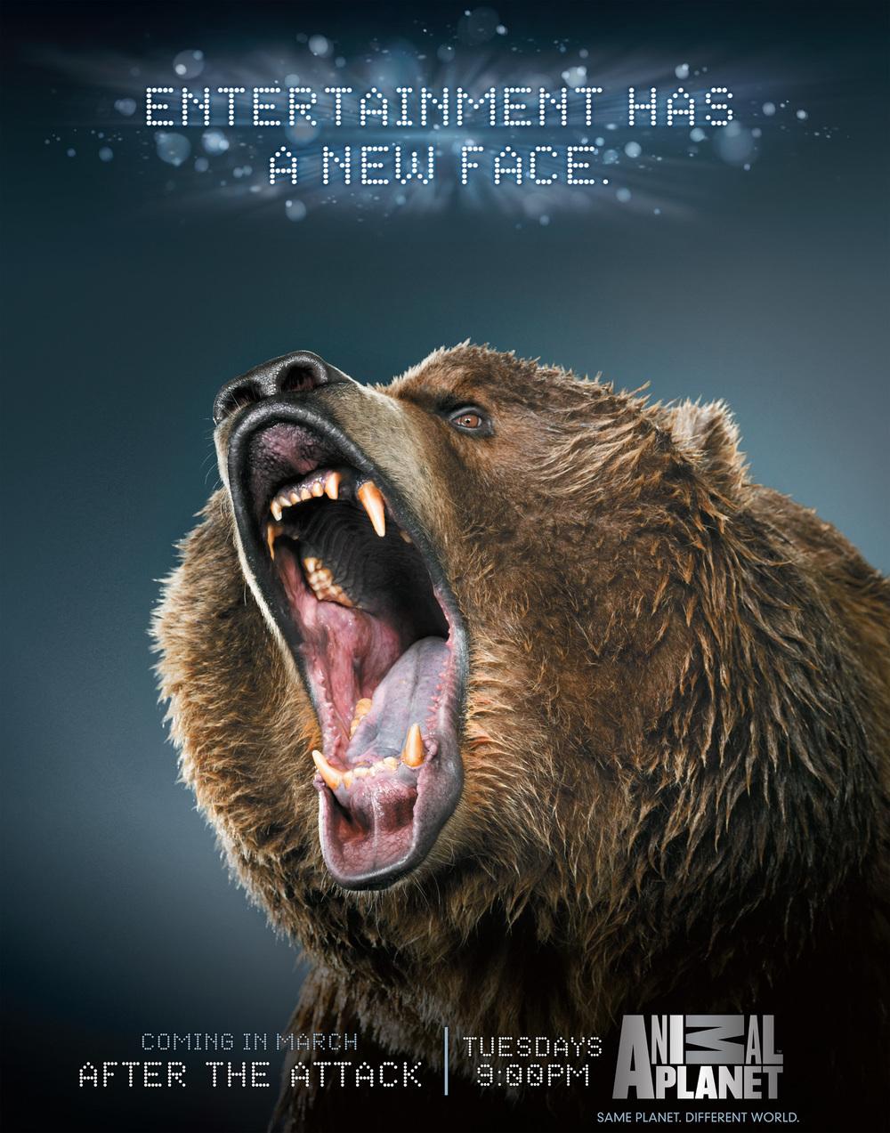 AnimalPlanet_Bear.jpg