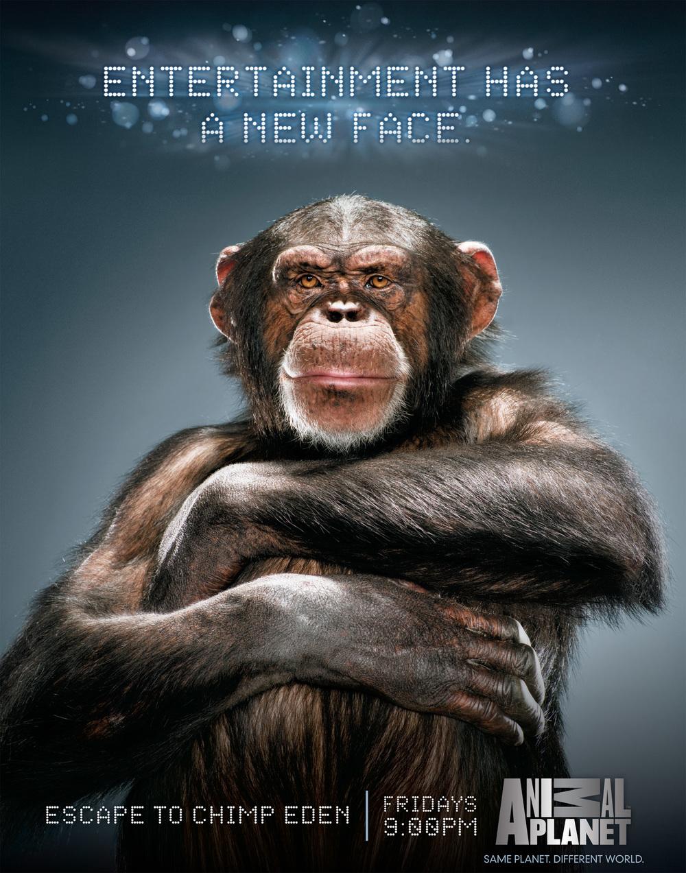 AnimalPlanet_Monkey.jpg