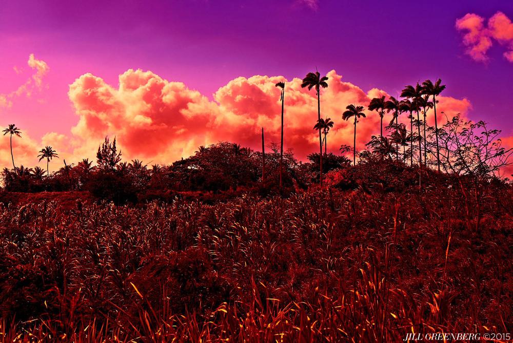 140217-21_Barbados_A_0083.jpg