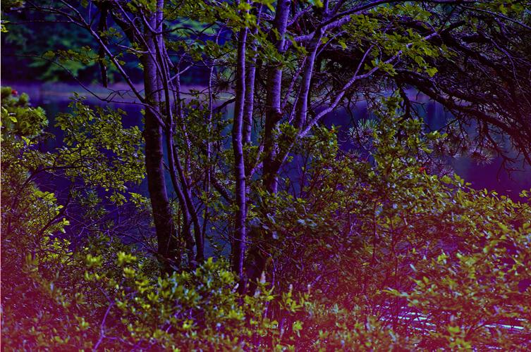 landscapecapecod_longpond.jpg