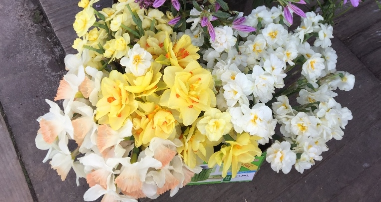 Pink Charm, Yellow Cheerfulness, Bridal Crown, Tahiti Narcissus (clockwise from 9pm)