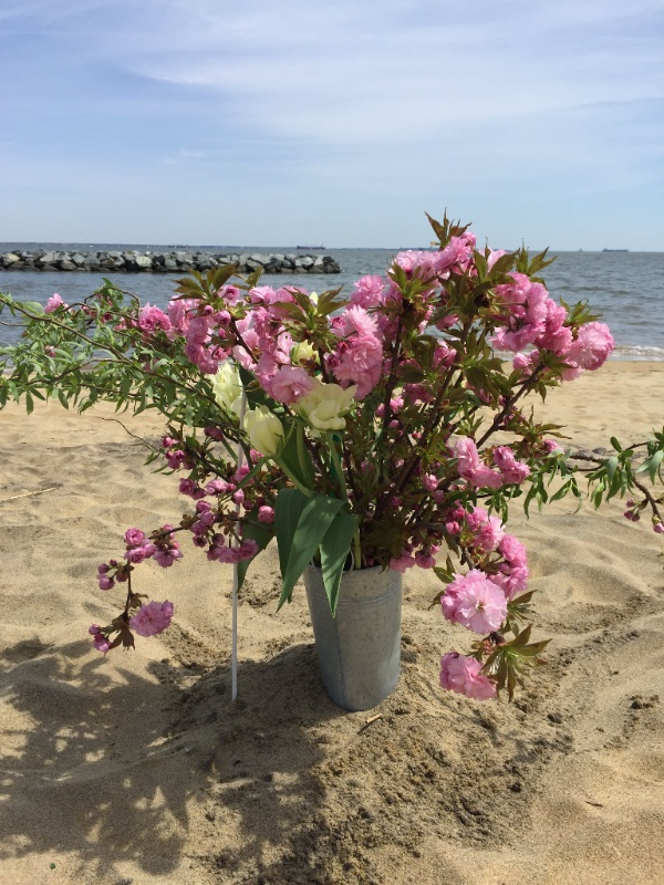 Cherry, willow, tulips, galvanized bucket Chesapeake Bay beach, April 2018