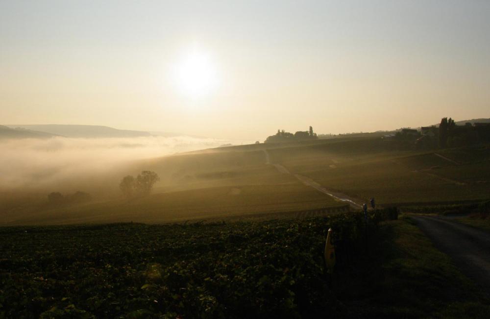 Pæn morgentåge i Vallée de la Marne