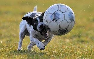 Que em 2016 a gente siga ainda com mais fome de bola e na luta por um futebol melhor para todos. Feliz Ano Novo! #BomSensoFC