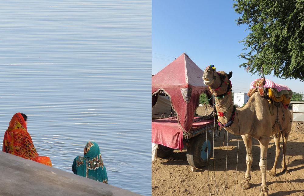 Pushkar water & Camel STORY.jpg