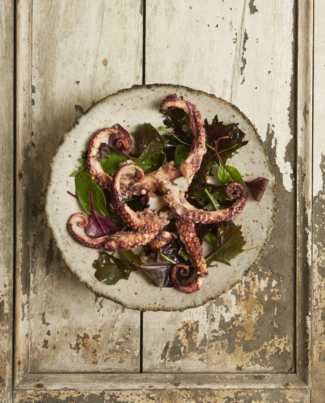 Octopus Polly.jpg
